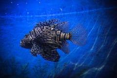 Underwater Landscape with Fishes in oceanarium Stock Photos