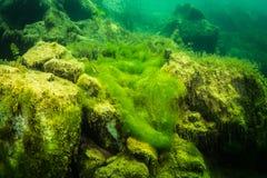Underwater landscape Stock Photography