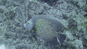 Underwater landscape in Grand Cayman stock video footage