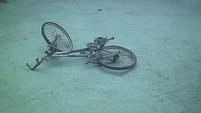 Underwater landscape in Grand Cayman stock footage