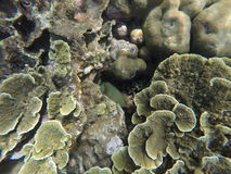 Underwater landscape with green and yellow corals and striped fish hiding. Seaside life scenery. Mimicry in nature. Ocean ecosystem. Coral reef with animal stock photography
