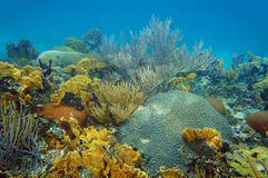 Underwater landscape in an healthy coral reef Stock Image
