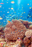 Underwater Landscape with Hundreds of Fishes. Near Tropical Coral Reef, Maldives Stock Images