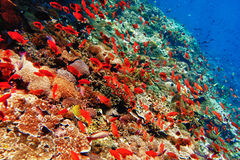 Underwater landscape Royalty Free Stock Photography
