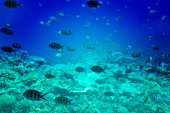 Underwater Landscape Of Red Sea. Royalty Free Stock Photography
