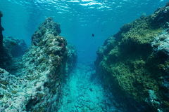 Underwater landscape outer reef Pacific ocean. Underwater landscape on the outer reef carved by the swell, Huahine island, Pacific ocean, French Polynesia stock photography