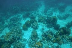Underwater landscape over a Caribbean coral reef Stock Photos