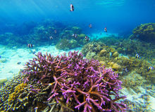 Underwater landscape with pink coral and tropical fish. Coral undersea photo. Seashore view. Coral closeup. Sea bottom with colorful coral ecosystem. Tropical Stock Images
