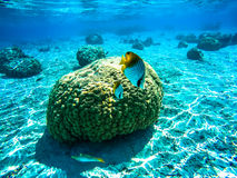 Underwater landscape in Polynesia Stock Photos