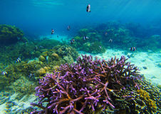 Underwater landscape with purple coral. Coral reef undersea photo. Seashore view. Sea bottom with colorful coral ecosystem. Tropical seashore snorkeling Stock Images