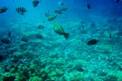 Underwater landscape of Red sea. Stock Images