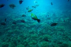 Underwater landscape of Red sea. Stock Photography