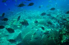 Underwater landscape of Red sea. Royalty Free Stock Images