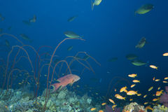 Underwater landscape of red sea Stock Photos