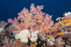 Underwater landscape of red sea Stock Images
