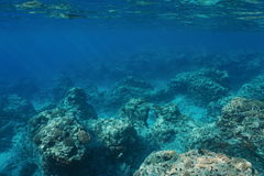 Underwater landscape rocky seabed Pacific ocean. Underwater landscape rocky seabed with corals on the outer reef slope, Pacific ocean ,Moorea, French Polynesia Royalty Free Stock Image
