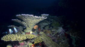 Underwater landscape sea of coral reef at night. stock video footage