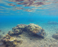 Underwater landscape with sea sand bottom and coral reef. Stock Image