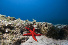 Underwater Landscape with star fish Stock Photo