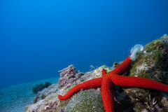 Underwater Landscape with star fish Royalty Free Stock Image