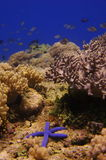 Underwater landscape with starfish. Scenic seascape showing blue starfish and various corals.The Philippines stock images