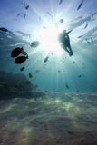Underwater landscape with sun-beams Stock Image