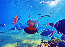 Underwater landscape with tropical fish. Colorful sea shore wildlife digital illustration. Aquarium fish in natural environment. Warm exotic island seashore Stock Image
