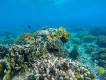 Underwater landscape with tropical fish and coral reef. Diverse coral in blue seawater. Marine animal in wild nature. Coral reef view. Tropical seashore royalty free stock photo