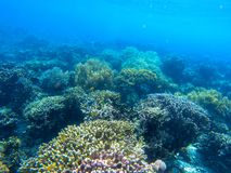 Underwater landscape with tropical fish and coral reef. Coral garden in blue seawater. Marine animal in wild nature. Coral reef view. Tropical seashore royalty free stock photo