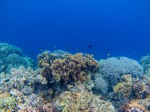 Underwater landscape with tropical fish and coral reef. Natural coral in blue seawater. Marine animal in wild nature. Coral reef view. Tropical seashore royalty free stock photo