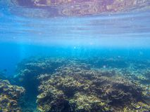 Underwater landscape with tropical fish and coral reef. Coral relief in blue seawater. Marine animal in wild nature. Coral reef view. Tropical seashore stock photos