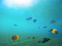 Underwater landscape with tropical fish. Sea water near exotic island with marine inhabitants. Stock Photos
