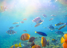 Underwater landscape with tropical fish and sunlight. Exotic island lagoon with oceanic life. Stock Photos