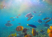 Underwater landscape with tropical fish and sunlight. Sun and blue water with oceanic life. Stock Photography