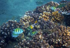 Underwater landscape with tropical fish. Undersea view photo. Fauna and flora of tropical shore. Coral reef underwater photo. Snorkeling in tropics. Exotic Royalty Free Stock Photos