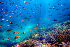 Underwater landscape Royalty Free Stock Image