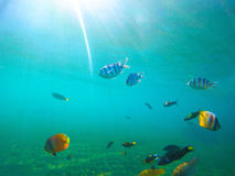Underwater landscape with tropical fishes. Sunny undersea scene with coral fishes. Sun flare and rays in clean blue seawater. Exotic seashore inhabitant stock images