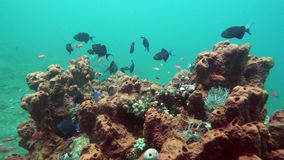 Underwater landscape of the tropical sea, fish and corals of different color.  stock footage