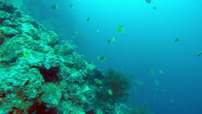 Underwater landscape of the tropical sea, fish and corals of different color stock footage