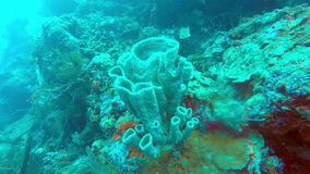 Underwater landscape of the tropical sea, fish and corals of different color stock video