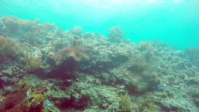 Underwater landscape of the tropical sea, fish and corals of different color.  stock video footage