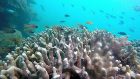 Underwater landscape of the tropical sea, fish and corals of different color stock video footage