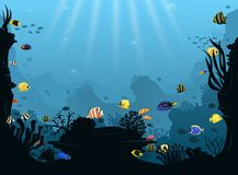 Underwater landscape with various water plants and swimming tropical fish Royalty Free Stock Photos