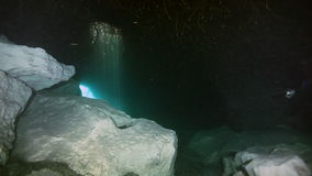 Underwater landscape and vegetation in lake cenote stock video footage