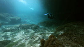 Underwater landscape and vegetation in lake cenote stock video