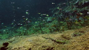 Underwater landscape and vegetation in lake cenote. Underwater landscape and vegetation in landscape Mexican Sacred Mayan Cenote. Deep underground clean and stock video footage