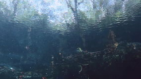 Underwater landscape and vegetation in lake cenote. Underwater landscape and vegetation in landscape Mexican Sacred Mayan Cenote. Deep underground clean and stock video