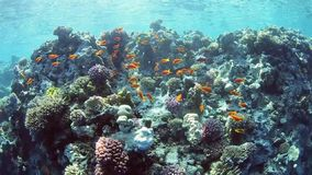 Underwater lanscape scene on a coral reef stock video footage