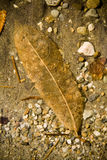 Underwater Leaf. Detail of decaying leaf underwater on a lake floor stock photography