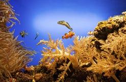 Underwater life Royalty Free Stock Photos